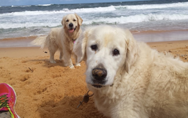 dogs beach