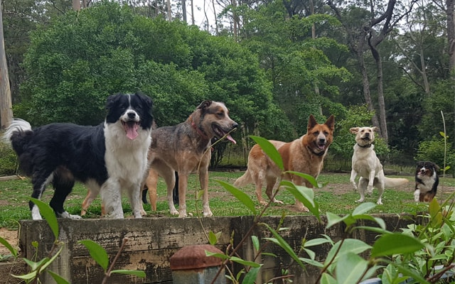 dogs adventure